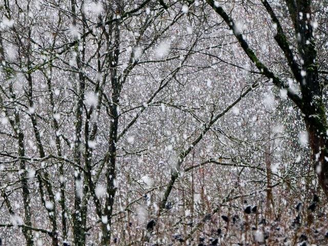 Grosse Schneeflocken.