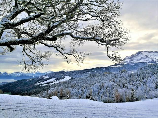 Blick aus dem Schnee bis unter die Schneefallgrenze