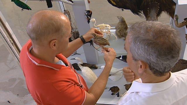 Mit einem Kollegen analysiert Zoologe Marftin Fischer in seinem Labor ein Vogelskelett.