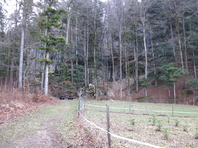 Waldrand, kahle Bäume, Fels im Hintergrund