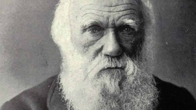 Darwin und der Regenwurm