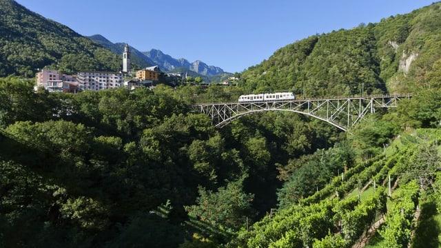 ein grosser Wald im Hintergrund, im Vordergrund eine Zugbrücke