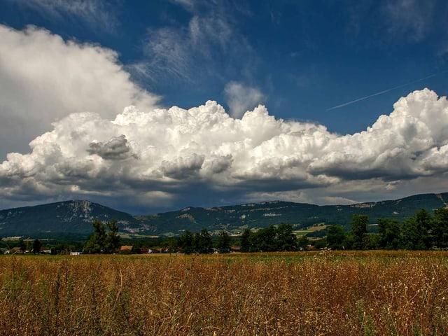 Ein Weizenfeld, über dem eine Wolke schwebt in Deitingen (SO).