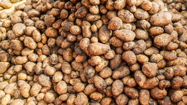 Eine Aufnahmen von vielen Kartoffeln.