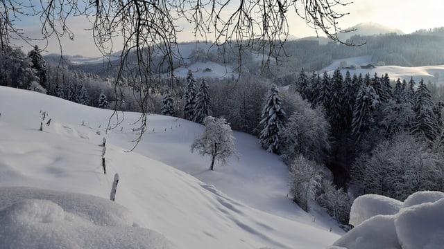 Verschneite Winterlandschaft im Tössbergland.