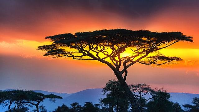 Sonnenuntergang in der Serengeti.