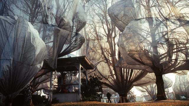 Eingepackte Bäume in Riehen nähe Basel, 1998: eines von vielen Projekten des Künstlerpaars Christo und Jeanne-Claude.
