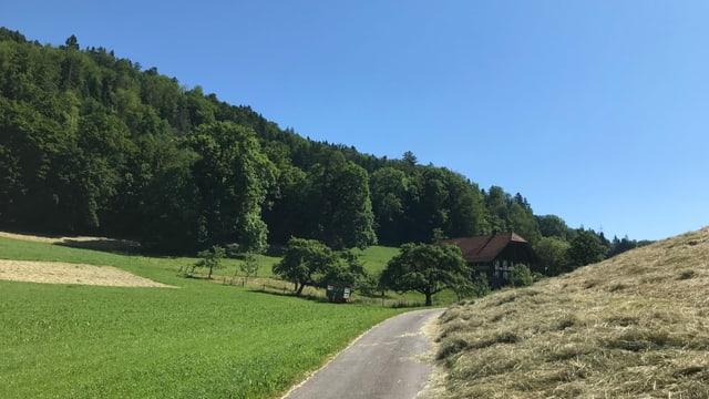 Landstrasse führt durch Wiesen. Rechte Wiese ist gemäht, am linken Rad steht ein Wald, der Himmel ist wolkenlos und mitten im Bild steht ein Bauernhaus.