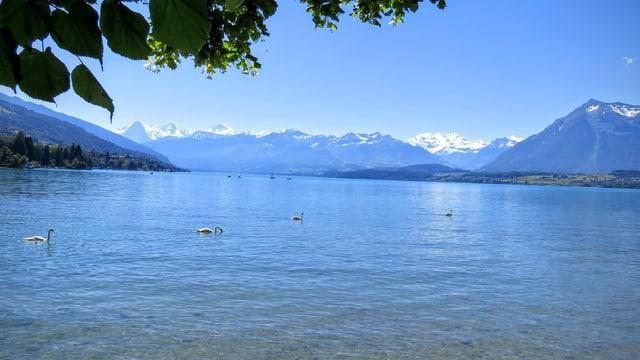Die Seen sorgen wenigstens noch für Abkühlung. Hier der Thunersee von der Schadau aus gesehen.