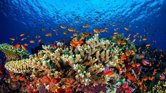 ina part intacta dal Great Barrier Reef.