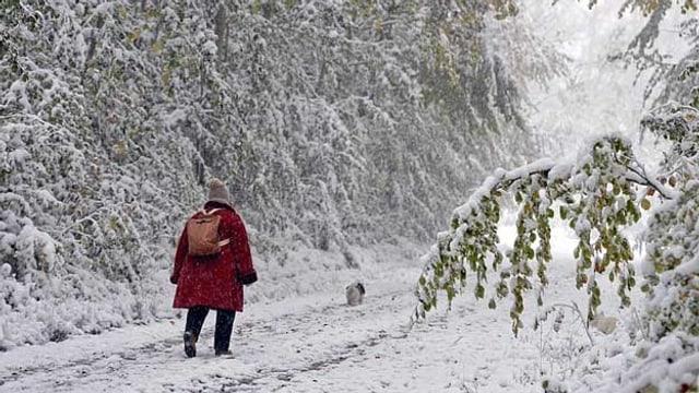 Frau mit Hund läuft durch eine verscheite Landschaft