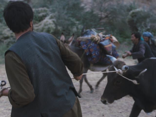 Ein Still aus dem Film «Wolf and Sheep».