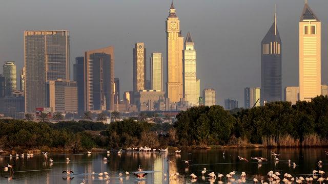 Dubais Hochhäuser hinter einem See mit Wasservögeln.