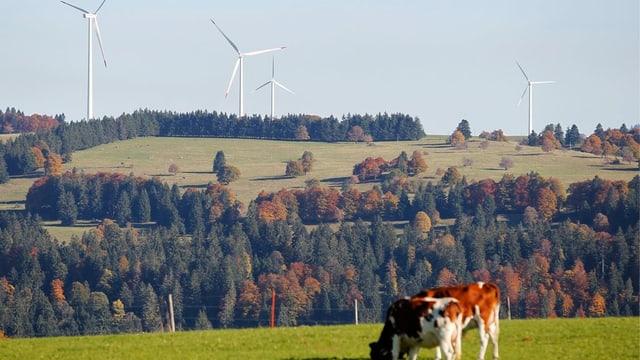 Windräder und Weide