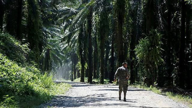 Mann in einer Palmölplantage.