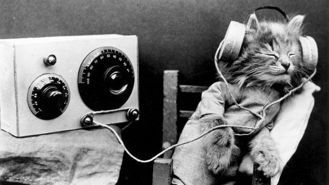 Katze am Radio hören