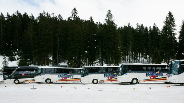 Busse stehen vor einem Wald schön aufgereiht.