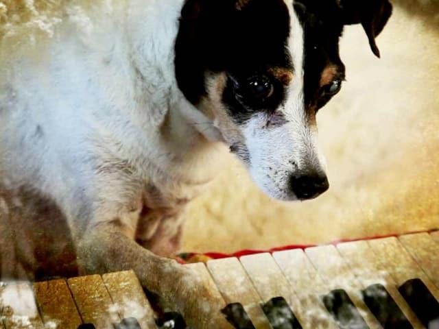 Ein Hund mit einer Pfote am Klavier.