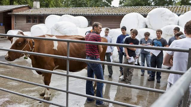 Bauernlehrlinge betrachten eine Kuh.
