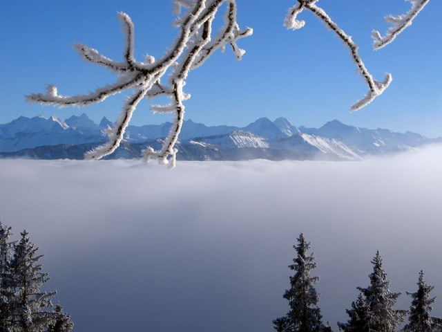 Blick über den Hochnebel zu den Alpen.