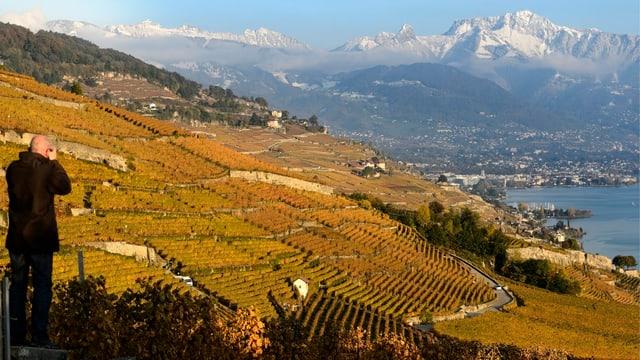 Rebberge von Lavaux bei Rivaz am Genfersee.