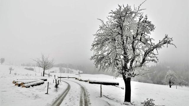 Verschneiter Feldweg am Renggpass mit einer nebligen Stimmung.