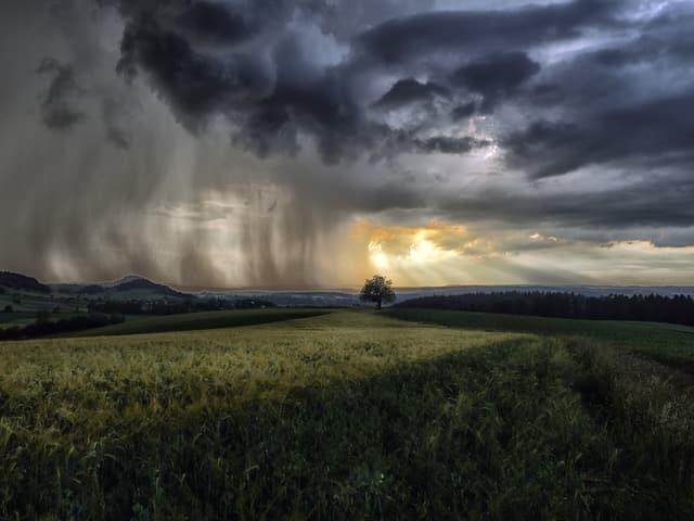 Regenvorhang und Sonnenstrahlen.