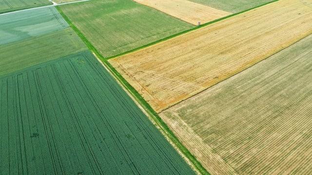 Terren agrar
