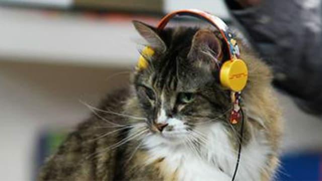 Katzenkopfhörer von Deadmau5