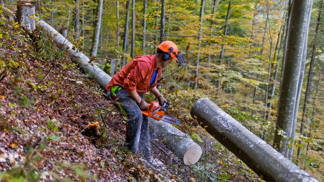 Ein Waldarbeiter bearbeitet einen Baum mit einer Kettensäge. Er steht an einem Hang.