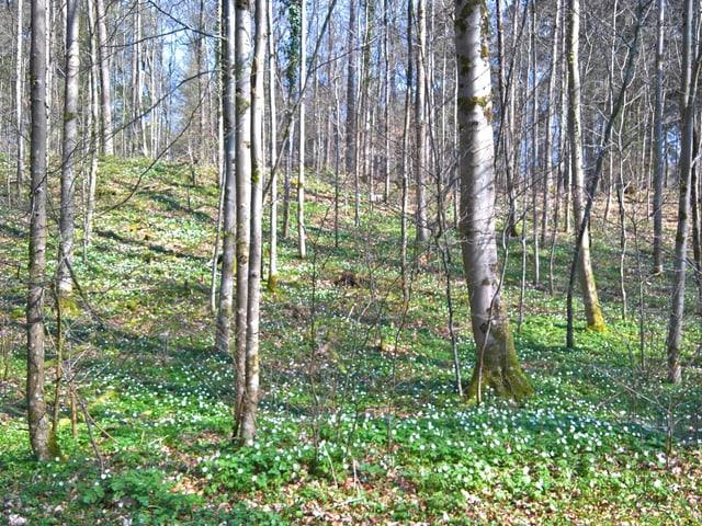 Wald ohne Blätter, am Boden erstes Grün.