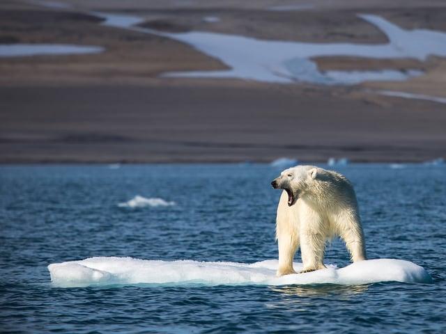 Ein Eisbär steht auf einer einsamen Eisscholle.