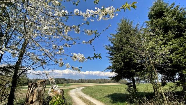 Felder in Urtenen-Schönbühl unter blauem Himmel mit Wolken am fernen Jura.