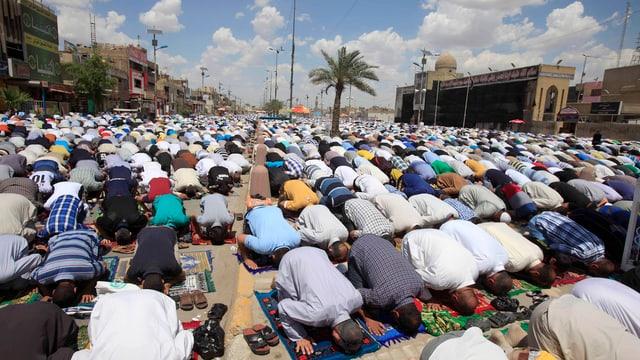 Schiiten in Bagdad beim Gebet.