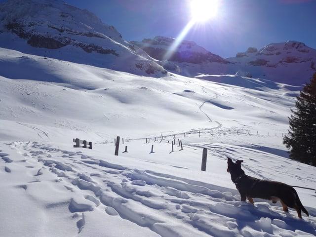 Ein Hund mitten im Schnee