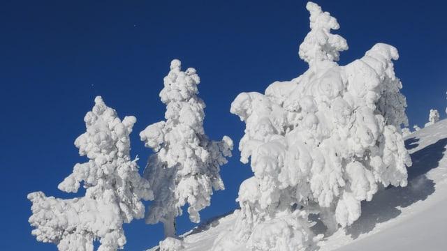 Tiefverschneite Winterlandschaft auf der Rigi am 18. Januar