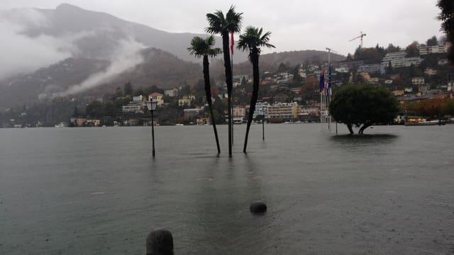 Der Lago Maggiore ist über die Ufer getreten, einige Palmen ragen aus dem Wasser.