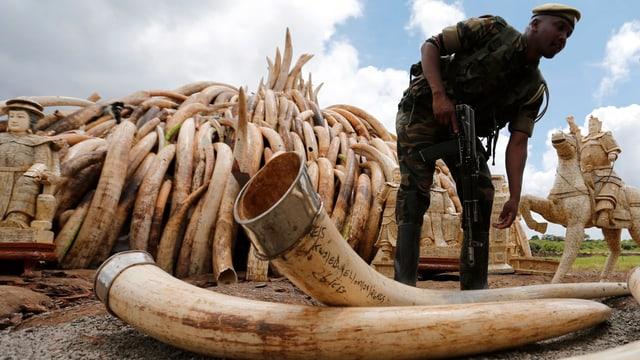 Ein Bewaffneter vor einem Berg Elefanten-Stosszähhne, die zur Verbrennung aufgeschichtet werden.