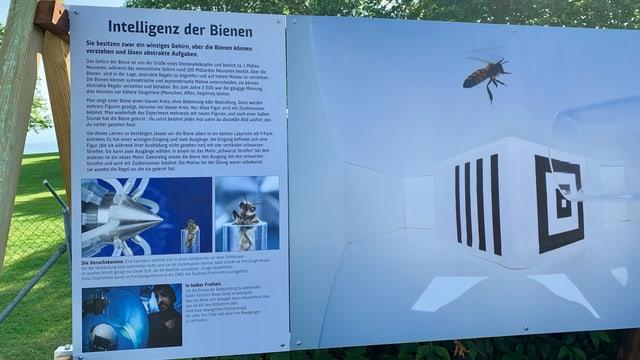 Mit diversen Fotos und Texten auf Tafeln vor dem Seeparksaal in Arbon zeigt das Bienenschutzprojekt «Bee Family» eine neue Ausstellung über die Bedeutung der Bienen.