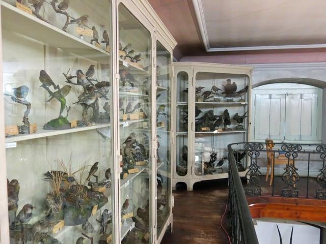 Eine grosse Vogelsammlung steht in verschiedenen Vitrinen.