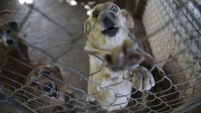 Deutlich mehr Tierschutzmeldungen
