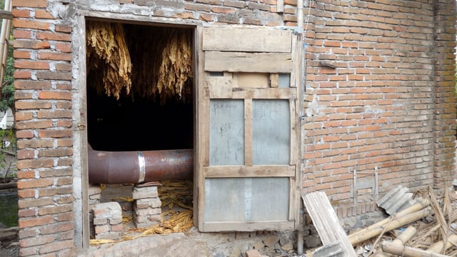 Ein Backsteinbau, dessen offene Türe den Blick auf Tabakfplanzen freigibt.