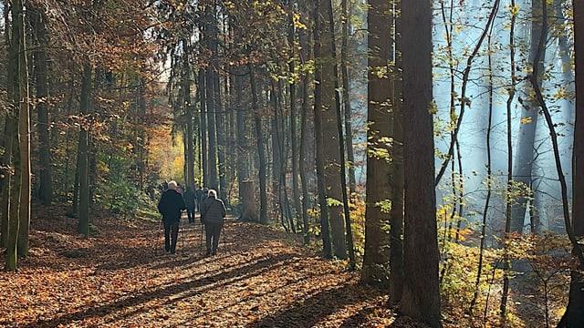 Menschen spazieren durch einen Wald.