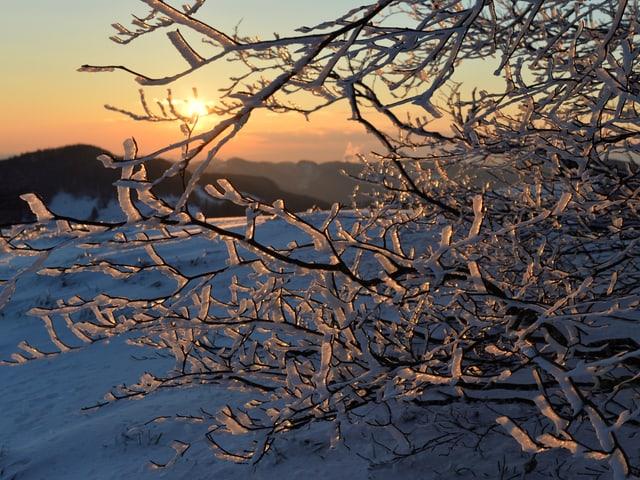 Baum mit Reif an den Ästen. Dahinter verschneite Landschaft und aufgehende Sonne am klaren Himmel.