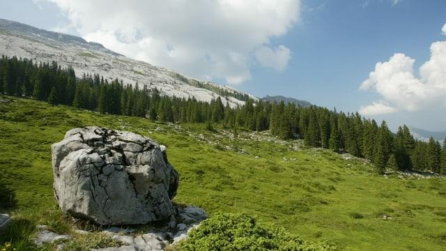 purtret d'in biotop en Val Müstair.