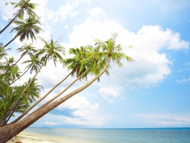 Sandstrand mit Palmen.