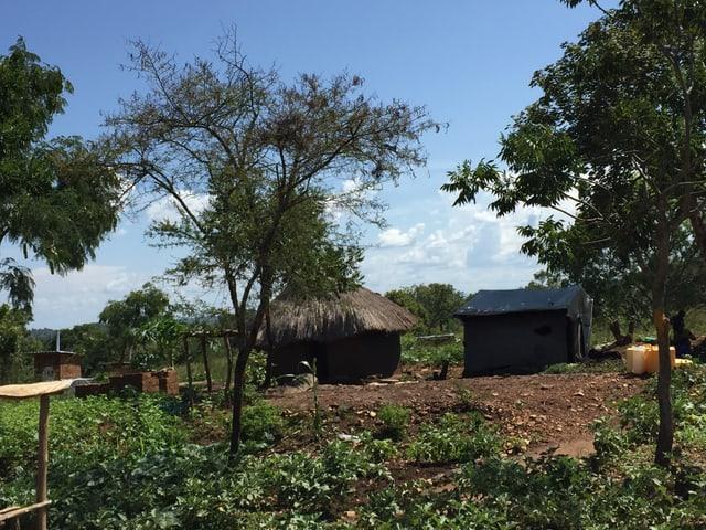 Zwischen Bäumen und Gärten stehen eine Lehmhütte mit Strohdach und ein Zelt aus Plachen.