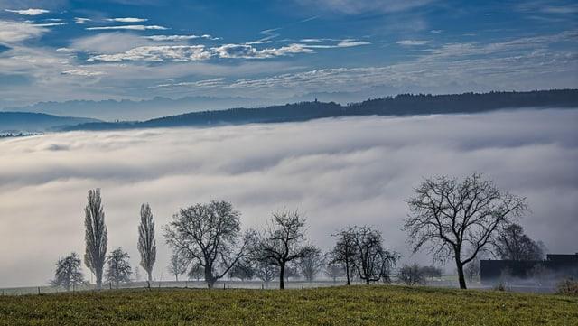 Blick vom Waldrand ob Nussbaumen über grüne Felder auf das Nebelmeer über dem Limmattal.