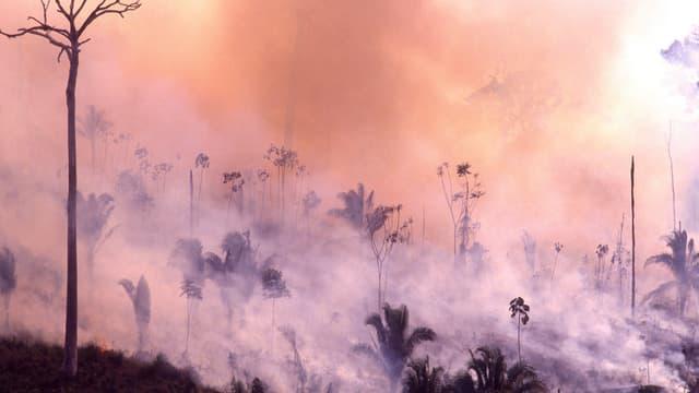 Ein brennender Wald.