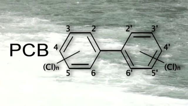Biphenils polichlorads